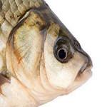 Fischkopp58